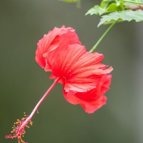 flower-2903988_1280