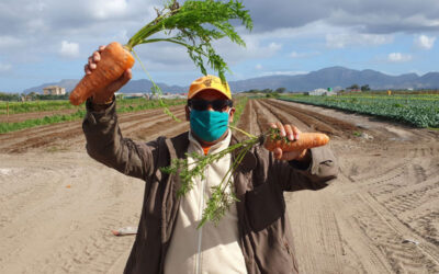 OP-ED: How organic farmer Nazeer Sonday became an accidental warrior for land reform and ecological justice